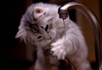 Kitten Hand Wash Picture - Kitten Hand Wash Picture