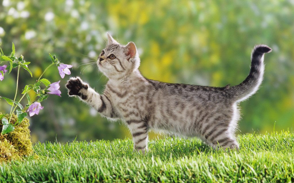 Kitten Playing Flowers - Kitten Playing Flowers