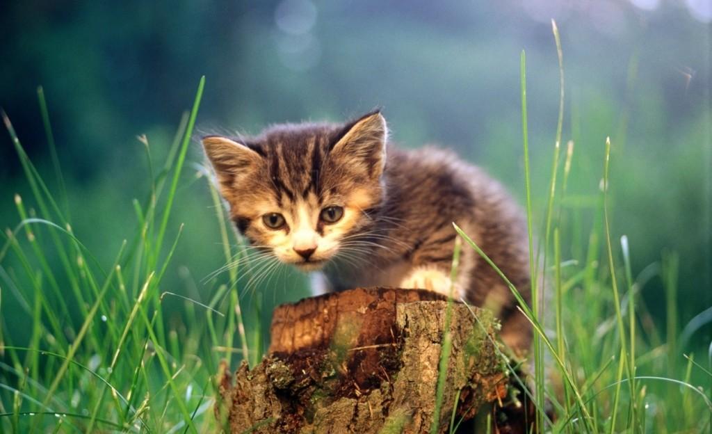 Little Kittens - Little Kittens