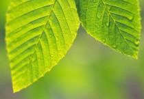 Natural Leaves Widescreen - Natural Leaves Widescreen