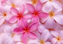 Pink Topical Flowers - Pink Topical Flowers