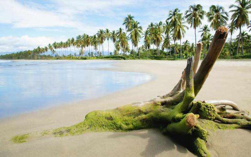Spread Of The Beautiful Beach - Spread Of The Beautiful Beach