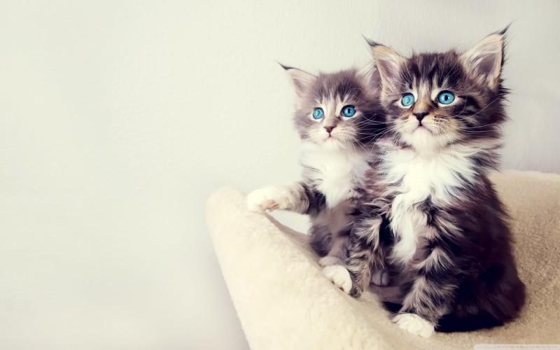 Top Kitten Images - Top Kitten Images