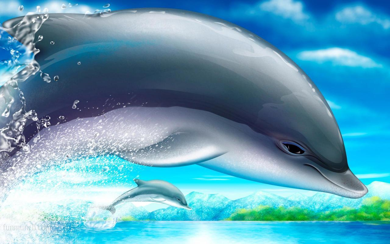 Dolphin Cartoon Picts - Dolphin Cartoon Picts