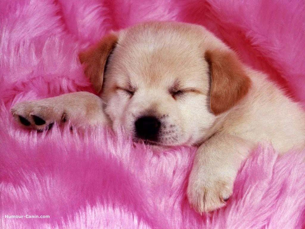 Sleeps Puppy Pinky - Sleeps Puppy Pinky