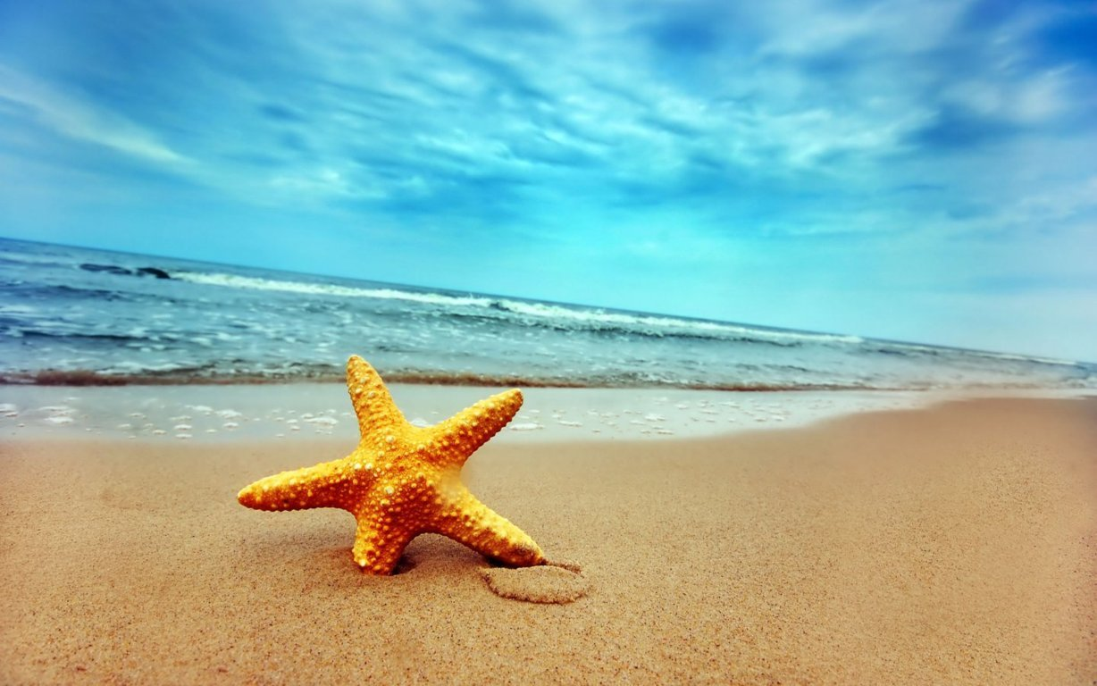 Starfish Summer Pictures - Starfish Summer Pictures