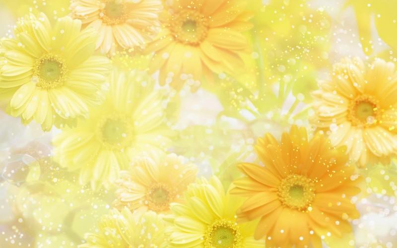Sun Flower Snow White - Sun Flower Snow White