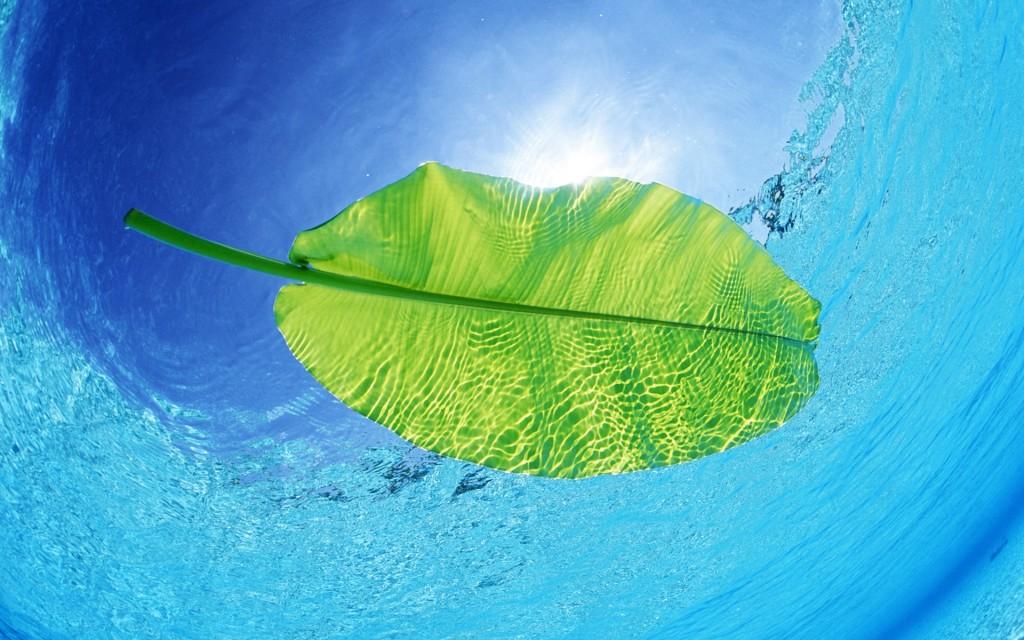 Tropical Fresher - Tropical Fresher