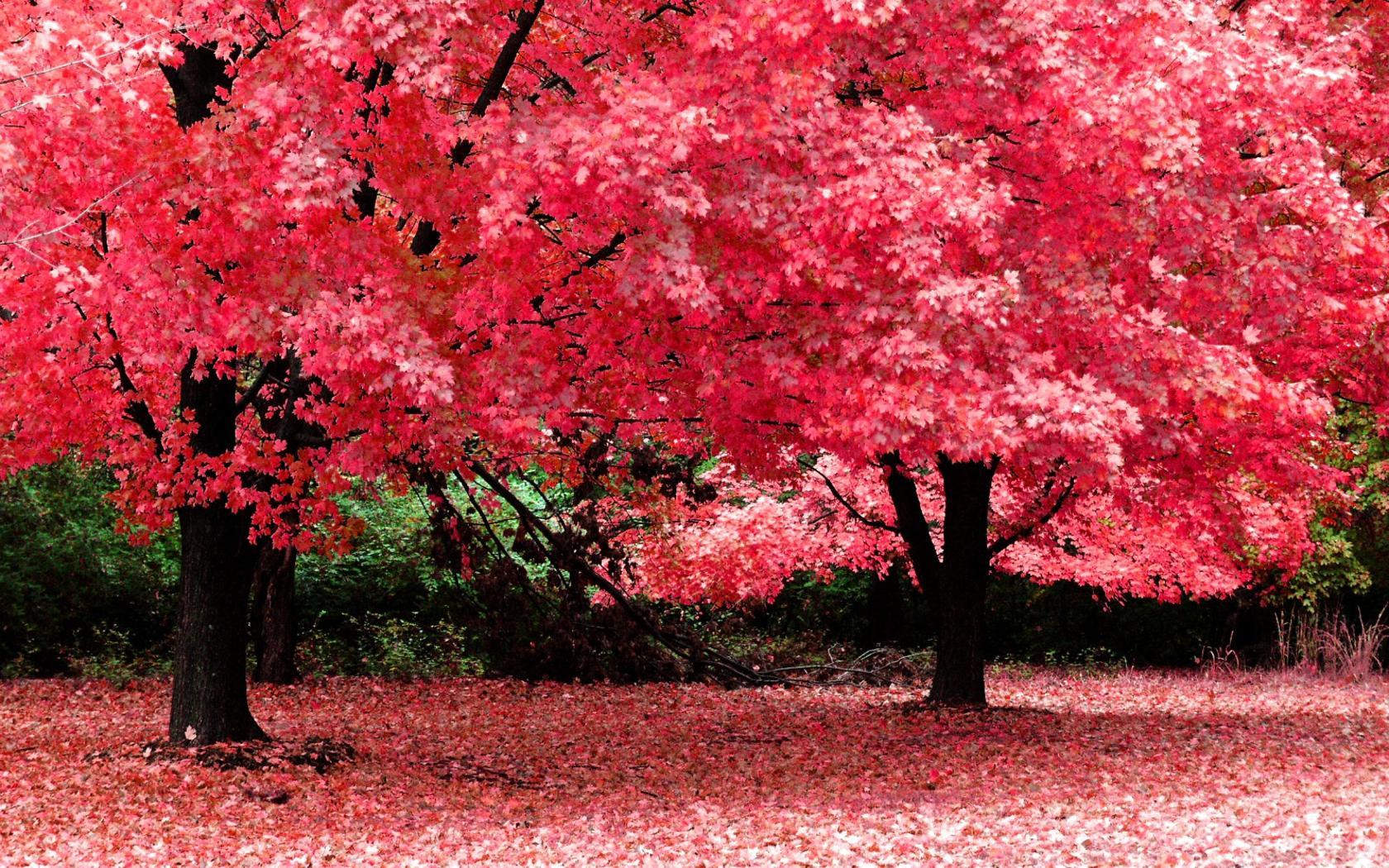 Autumn Garden Widescreen - Autumn Garden Widescreen