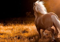 Beautiful Lovely Horse - Beautiful Lovely Horse