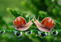 Couple Snail 3D - Couple Snail 3D