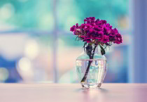 Exotic Purple Carnation - Exotic Purple Carnation