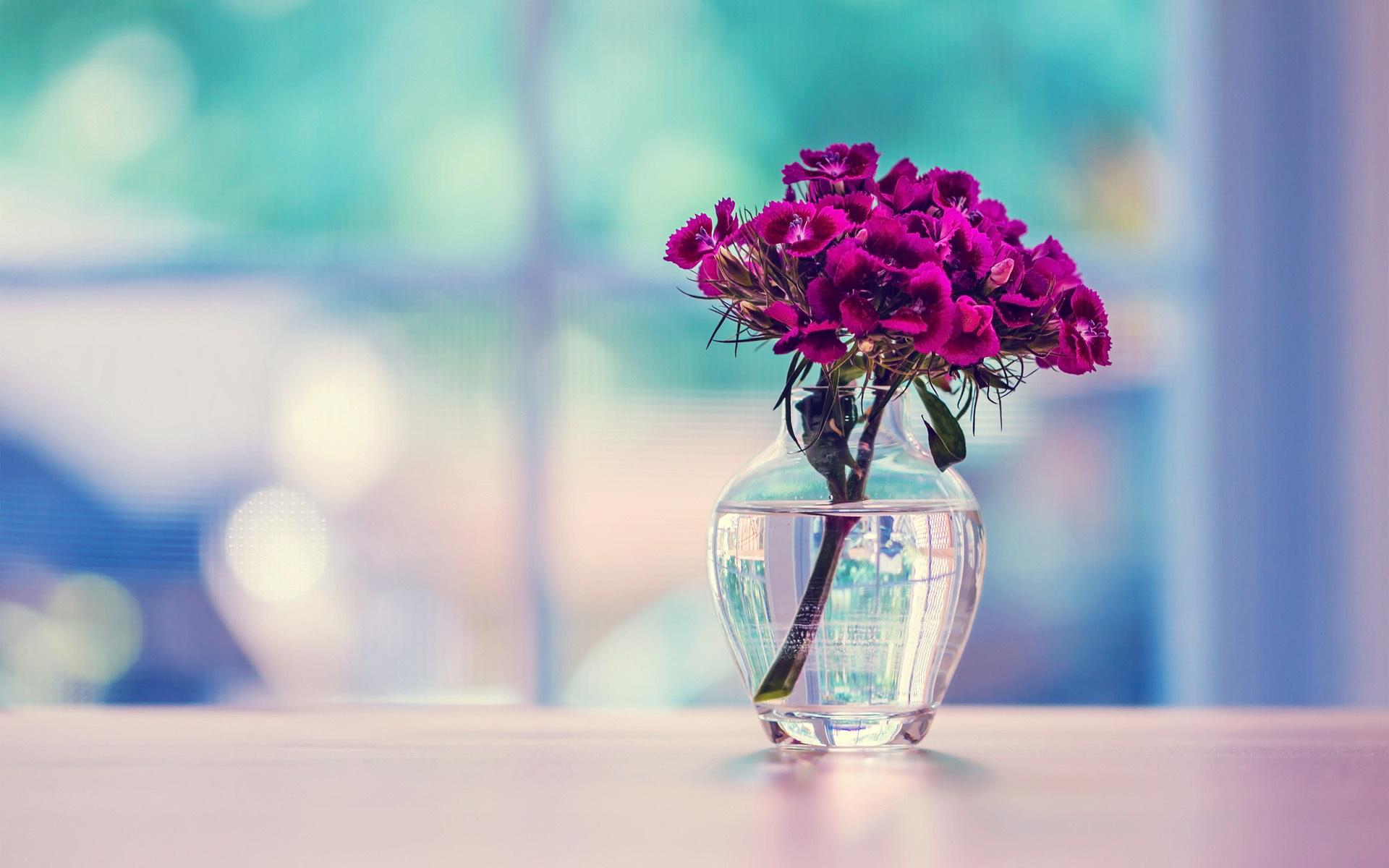 Exotic Purple Carnation - Exotic Purple Carnation