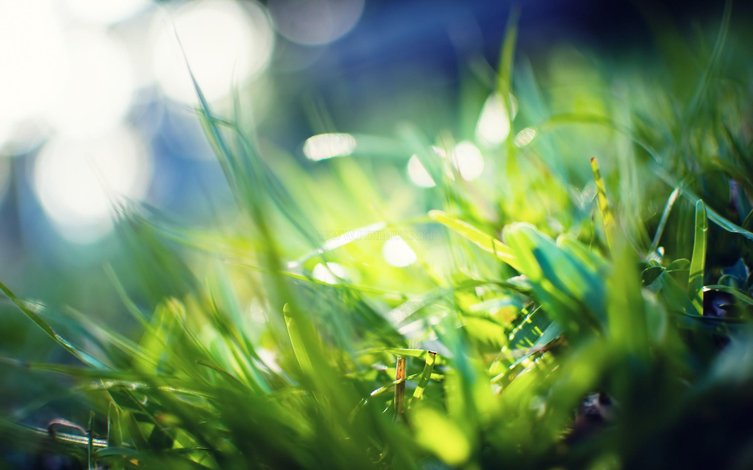 Green Grass Photos - Green Grass Photos