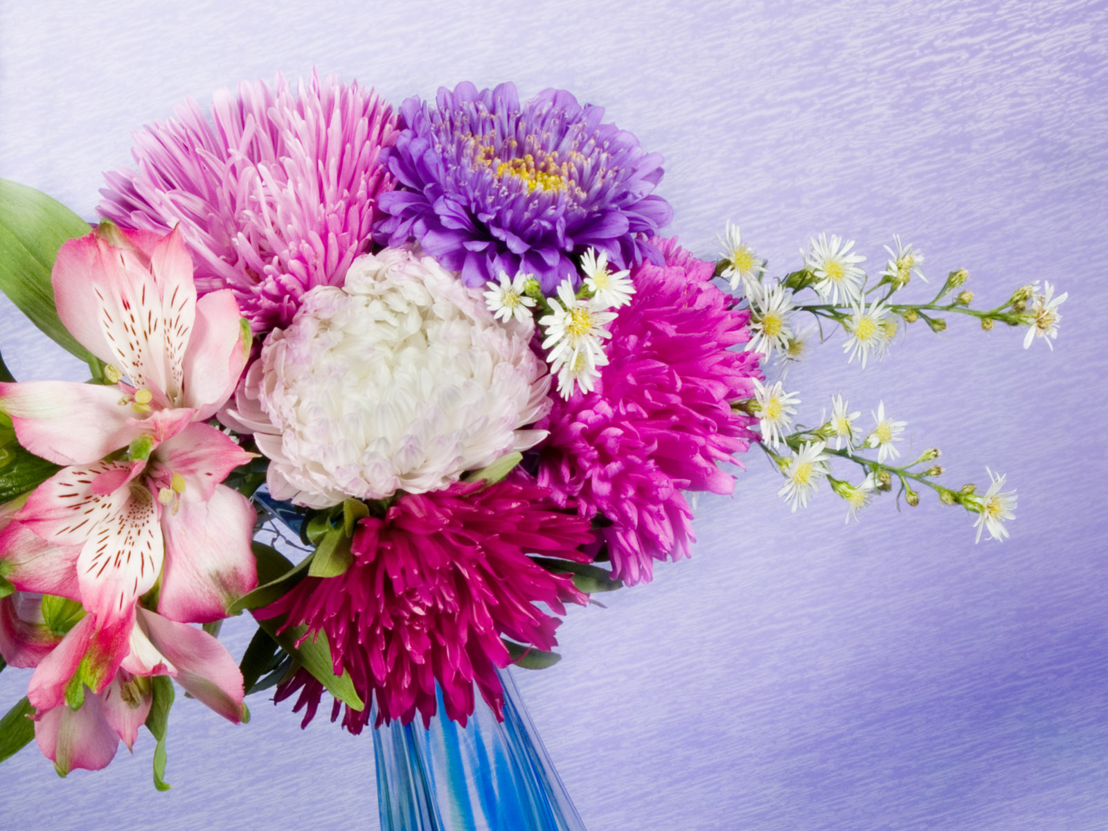 Pastels Carnation Colours - Pastels Carnation Colours