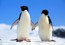 Romantic Hold On Penguins - Romantic Hold On Penguins