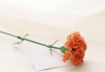 Sweet Letter Carnation - Sweet Letter Carnation