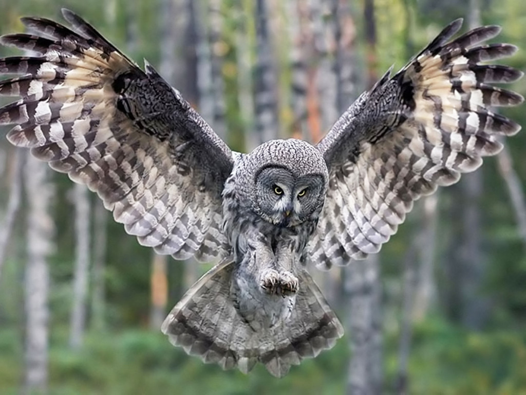 Sweet Owl Landing - Sweet Owl Landing