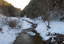 Wandering Winter Stream Surrounded by Trees