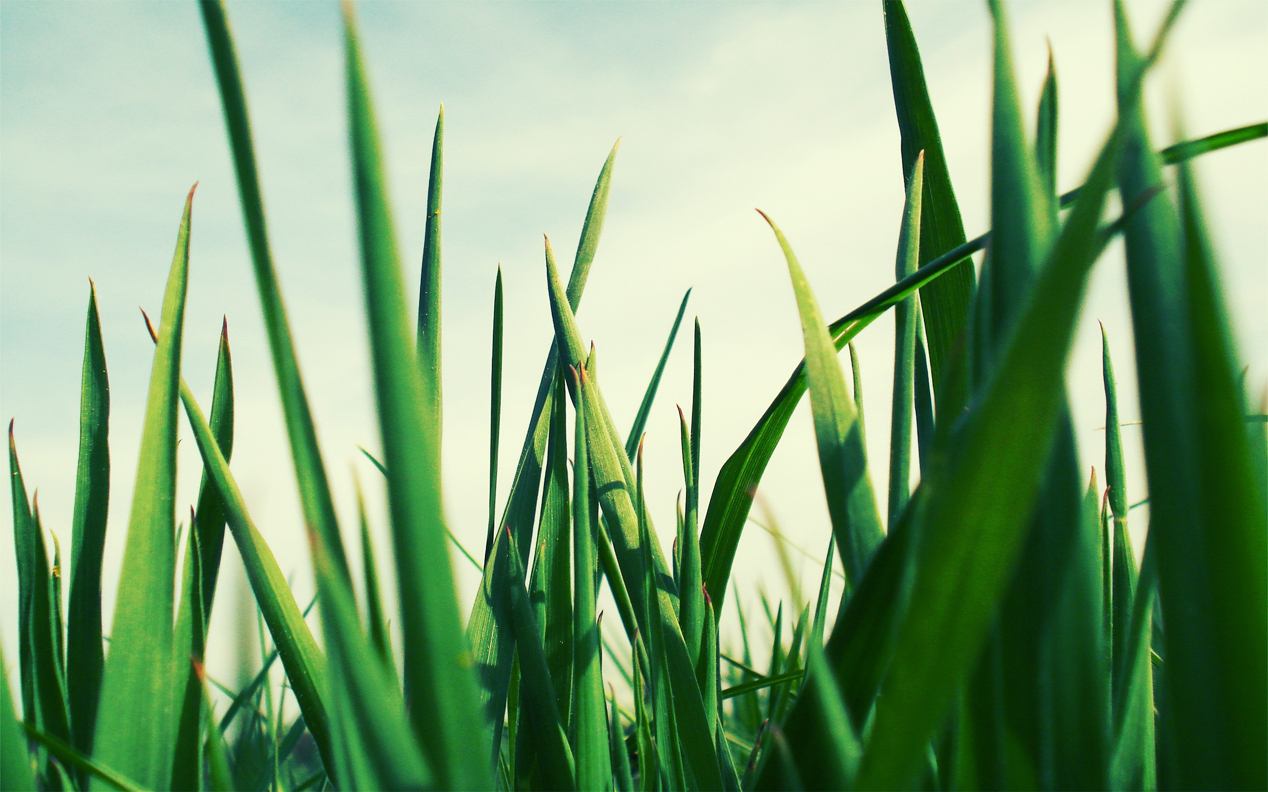 terraria how to get blade of grass