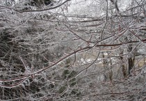 Freezing Rain Coats Tree Branches with Ice
