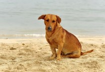 Dog Playing in the Sand at the Beach