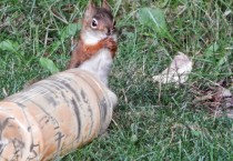 9 That is a Happy Squirrel!