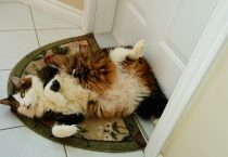 Fat Cat Chillin