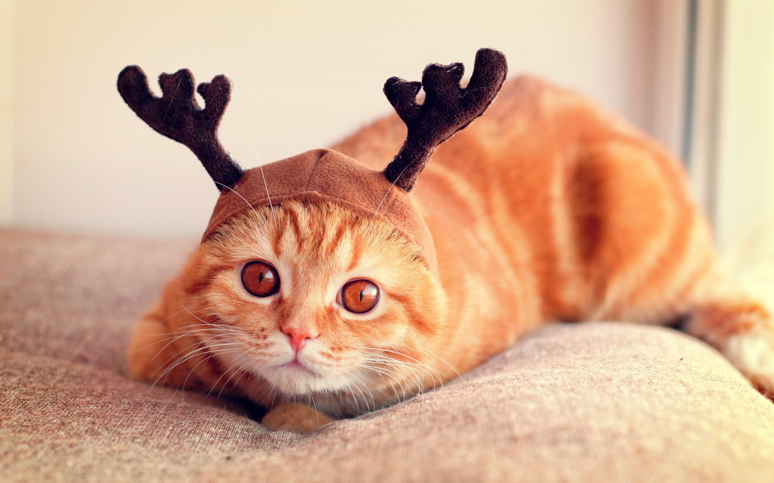 Cutest Reindeer