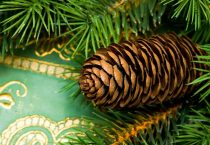 Green Wrapped Gift with Pine Cone