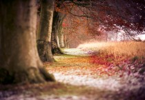 Autumn Trees Wallpaper - Autumn Trees Wallpaper