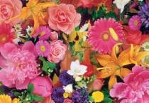 Blooming Flowers - Blooming Flowers