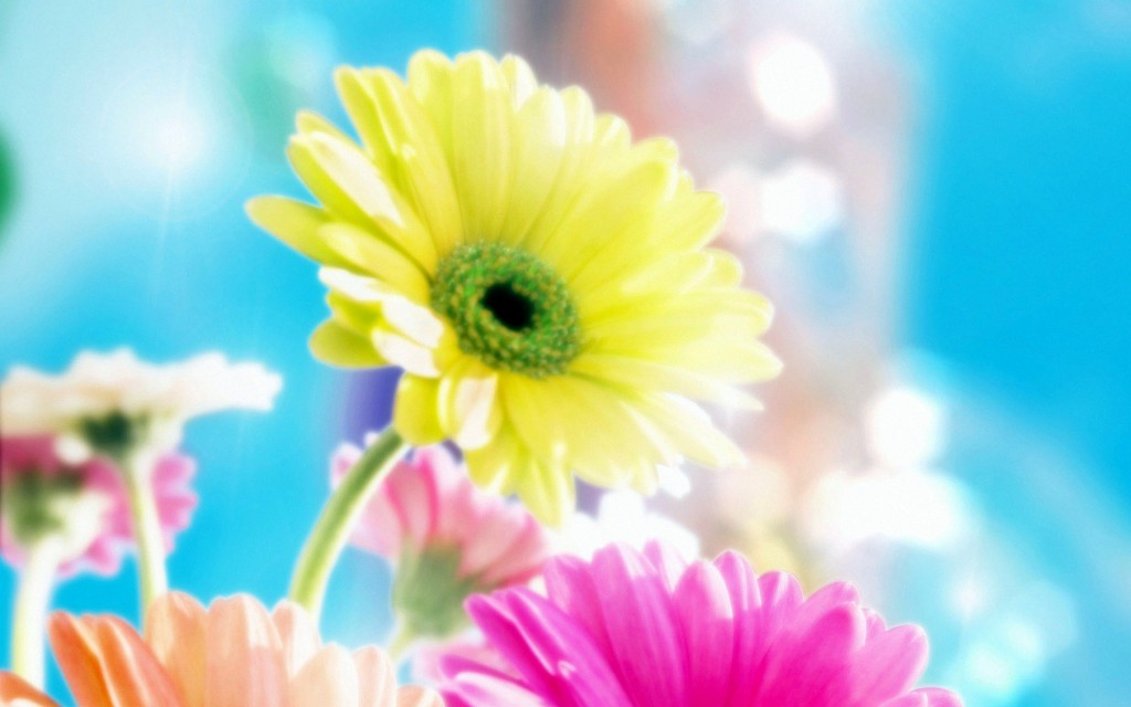 Glamour Flowers - Glamour Flowers