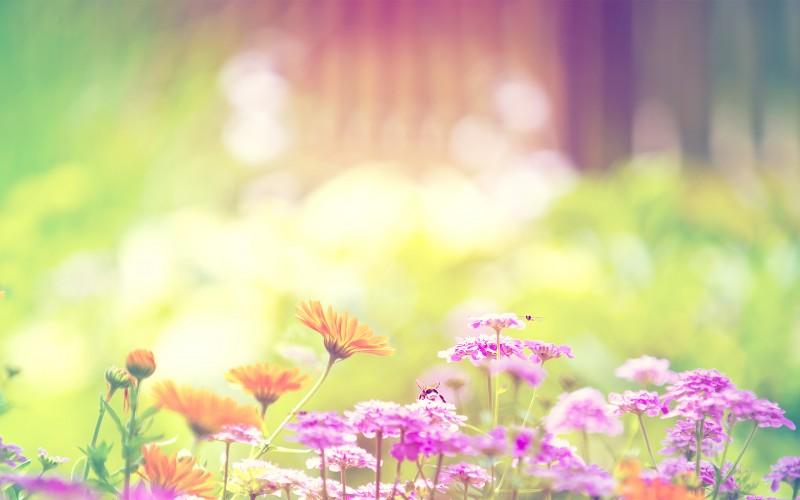 Marigold Lilac Purple Flowers - Marigold Lilac Purple Flowers
