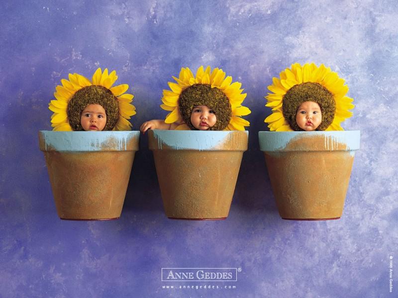 Sun Flower Sweet Babies - Sun Flower Sweet Babies