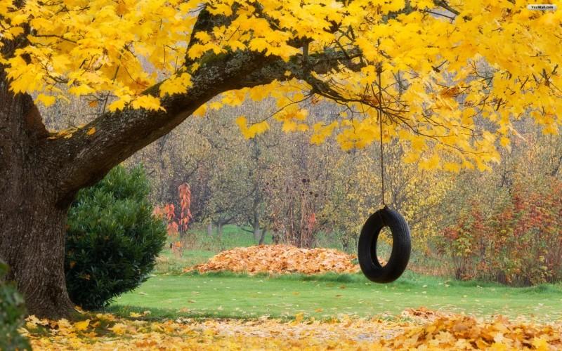 Autumn Rope Swing - Autumn Rope Swing
