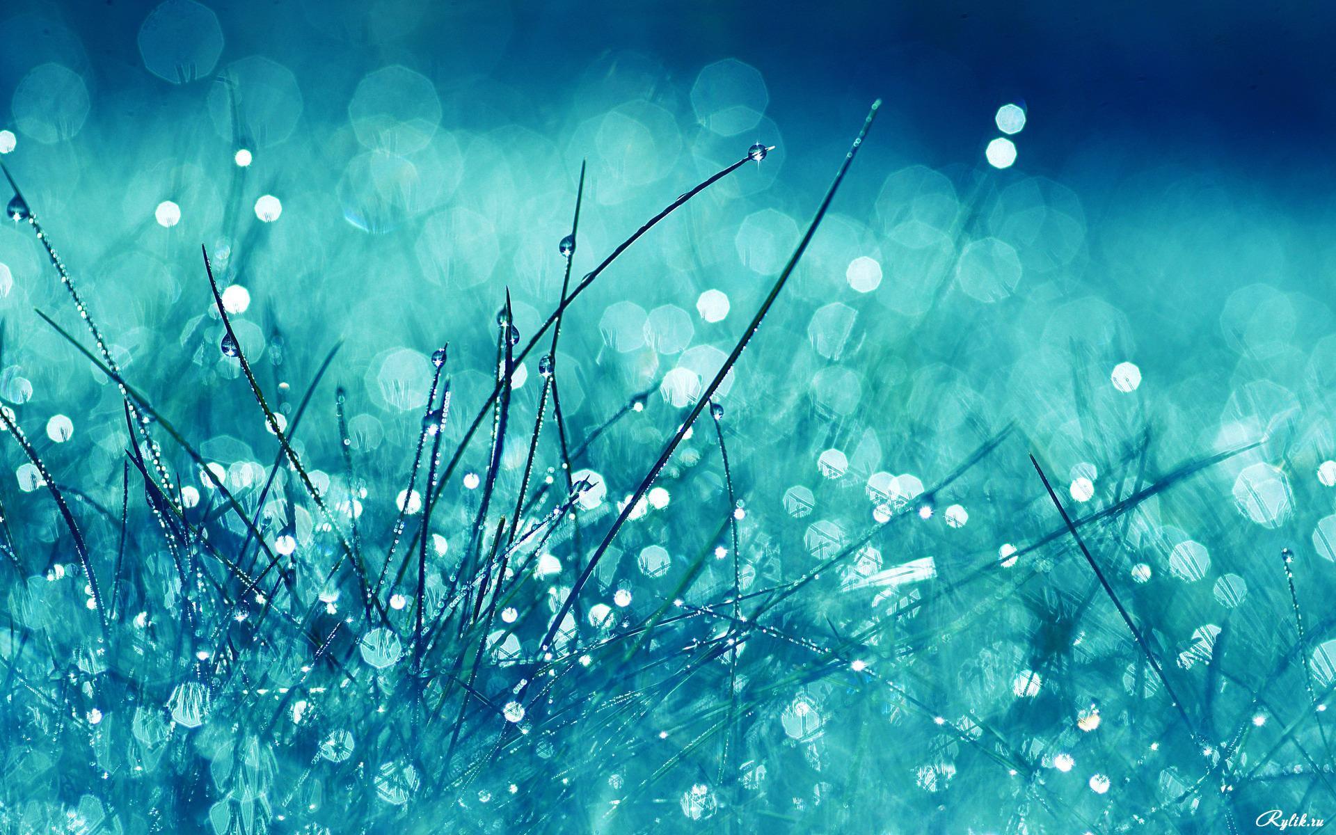 Blue Dew On The Grass - Blue Dew On The Grass
