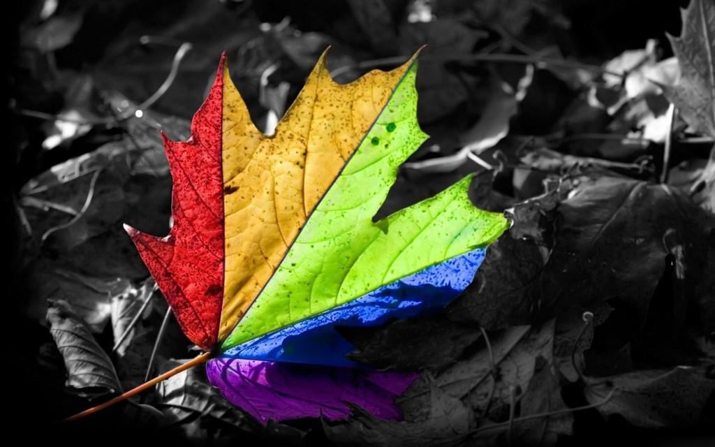 Bright Canadian Maple - Bright Canadian Maple