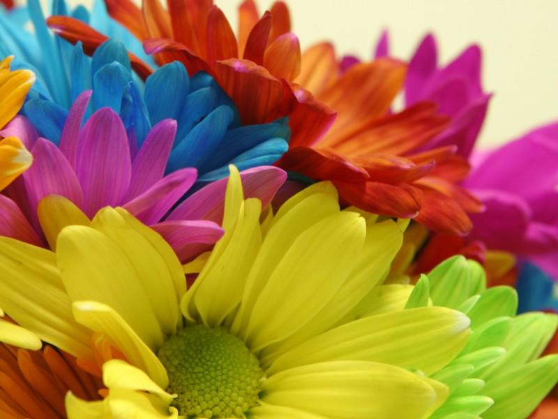 Bright Color Blooms - Bright Color Blooms