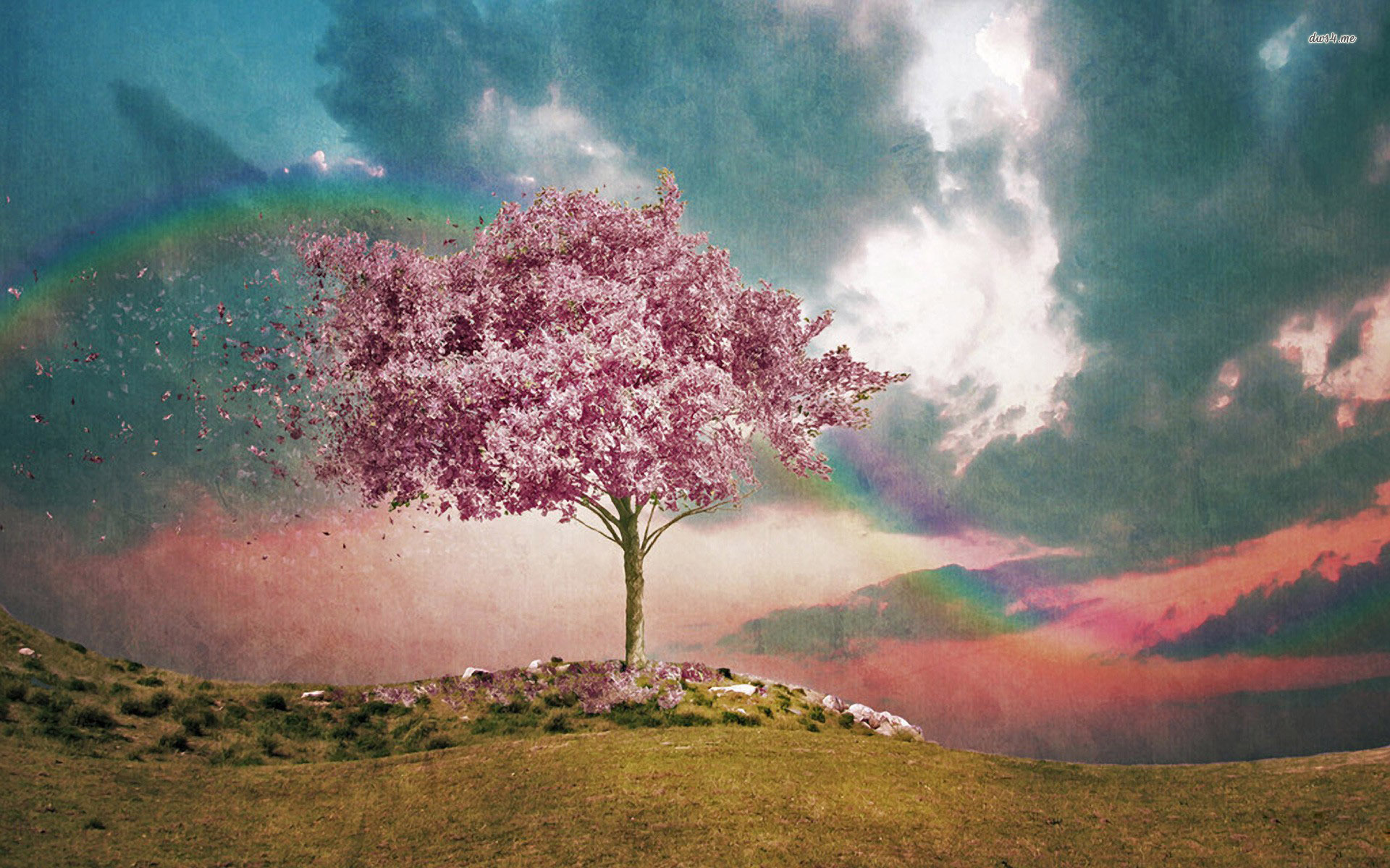 Cherry Tree and The Rainbow - Cherry Tree and The Rainbow