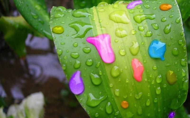 Dew Drops Bright Colors - Dew Drops Bright Colors