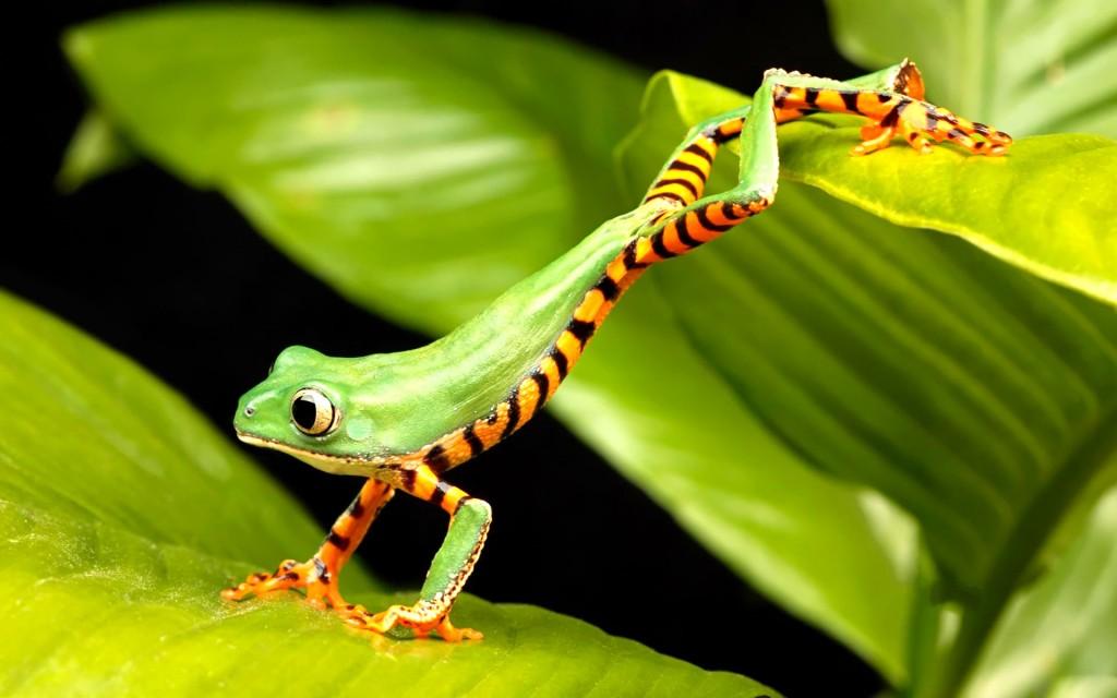 Frog Jump - Frog Jump