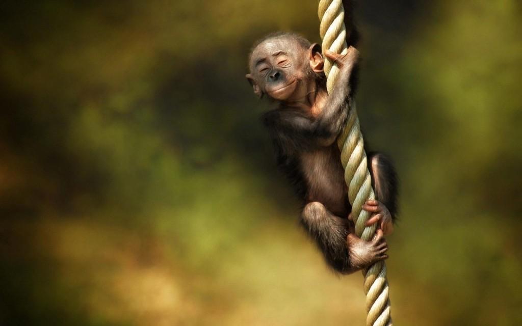 Little Monkey Swing - Little Monkey Swing