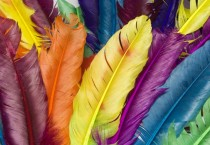 Rainbow Feather Colorful - Rainbow Feather Colorful