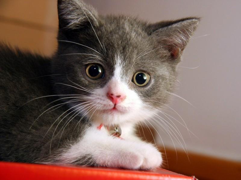 Sweet Cat - Sweet Cat