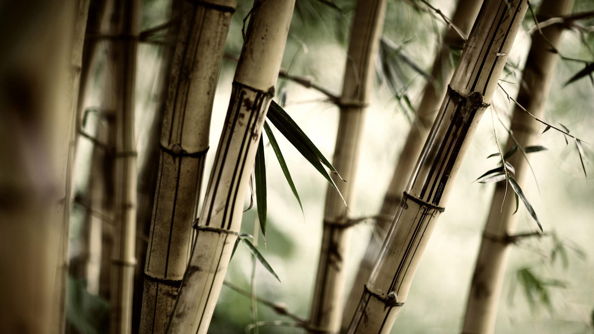 Zen Nature Bamboo - Zen Nature Bamboo
