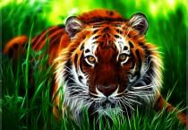 Incisive Tiger - Incisive Tiger
