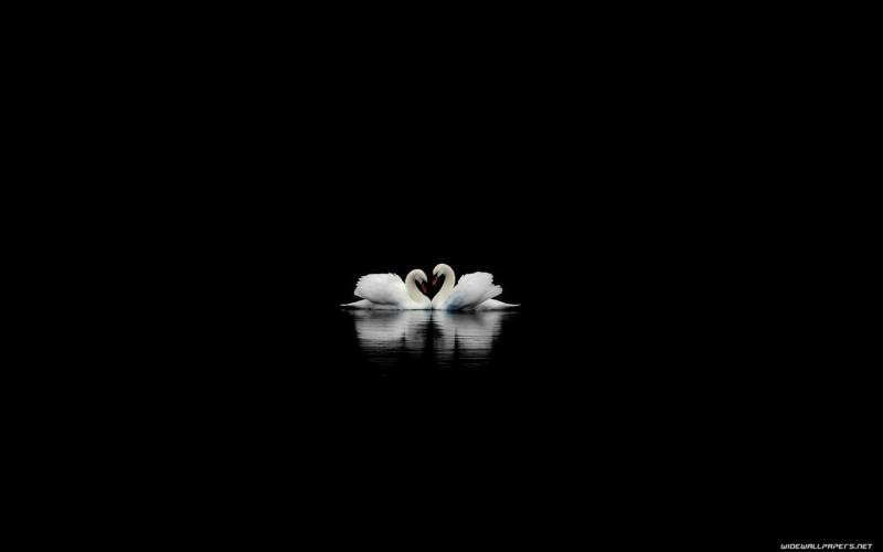 Swans Black Wallpaper - Swans Black Wallpaper