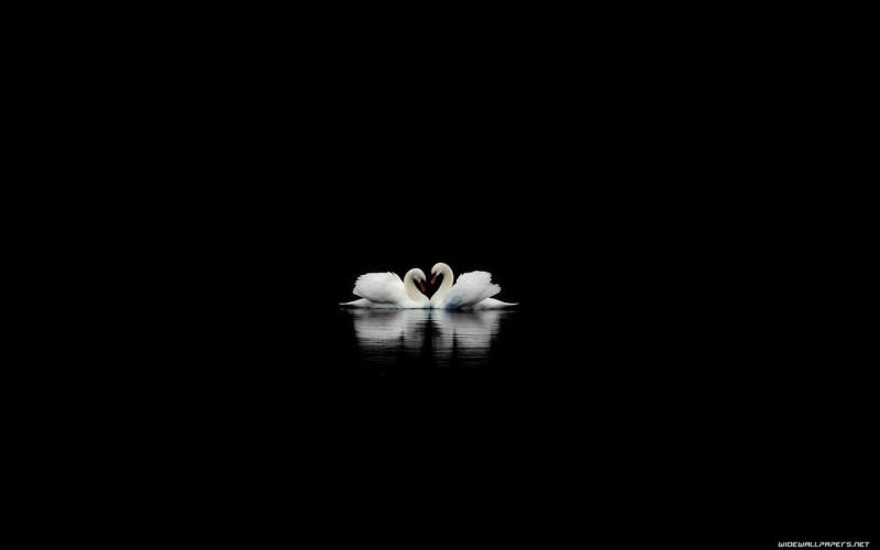 Swans in The Dark - Swans in The Dark