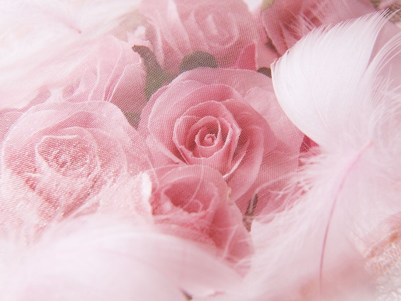 Wedding Roses Backgrounds - Wedding Roses Backgrounds